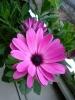 ピンクの花。