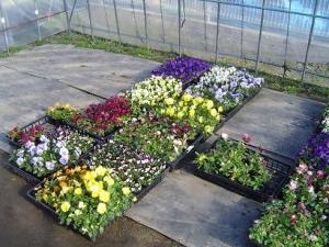 納品を控えるお花たち