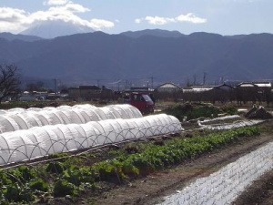 井ノ口の風景