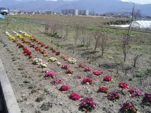 再生する花壇