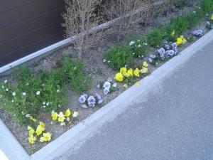 冬に植えたお花