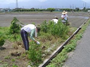 井之口花壇の草取り