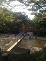 曼珠沙華 川1