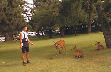 16鹿と車夫さん_NEW.jpg