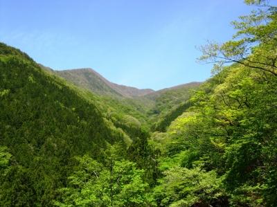 赤城温泉のある湯ノ沢の新緑(荒山)