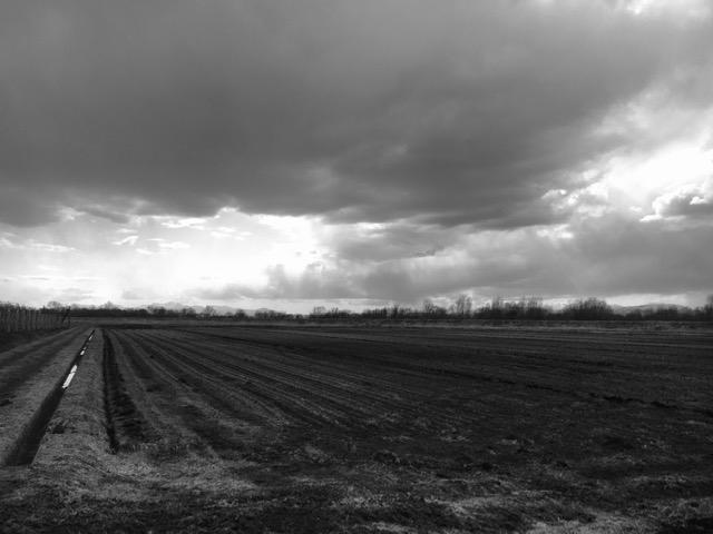 農作業も始まりました