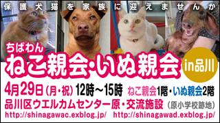 nekoinuoyakai20130429_320x180.jpg