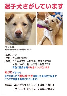 web_haku.jpg