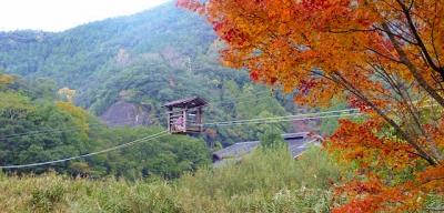 十津川村昴の郷の野猿