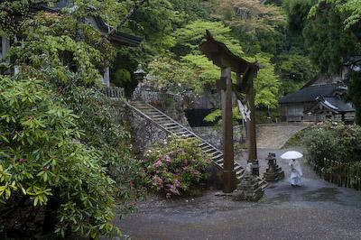 玉置神社境内シャクナゲ