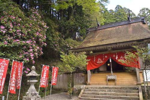 三柱神社とシャクナゲ