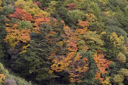 玉置山の紅葉2
