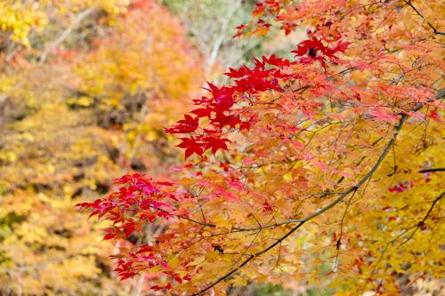 玉置山の紅葉3