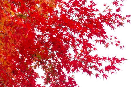玉置山の紅葉4