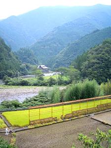十津川村神納川地区