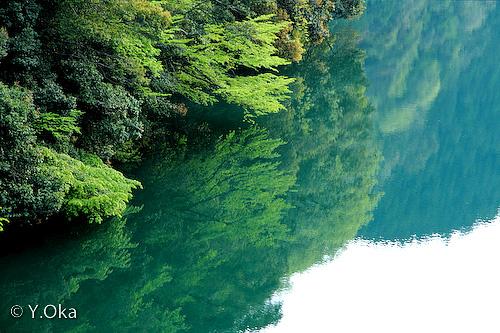 湖畔の新緑