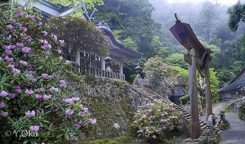熊野三山奥之宮 玉置神社