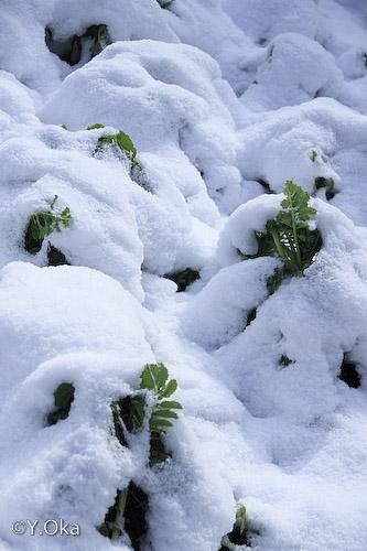 雪化粧の十津川温泉