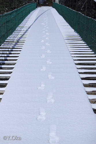 雪の猿飼橋