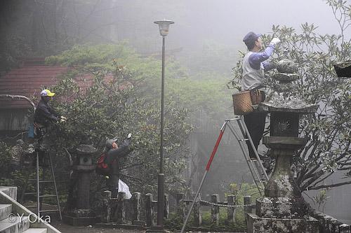 玉置神社花摘み