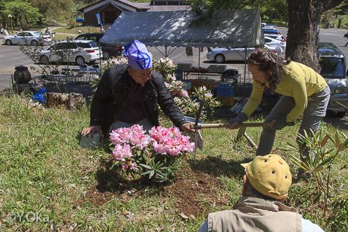 石楠花まつり記念植樹