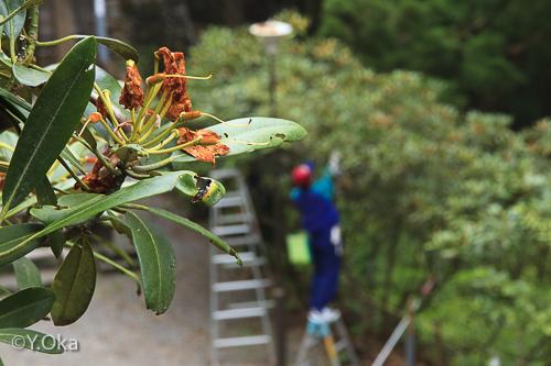 玉置神社花がら摘み