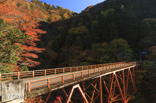 白谷橋の紅葉