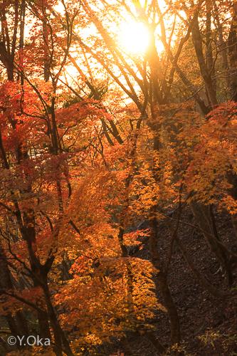 玉置山の紅葉