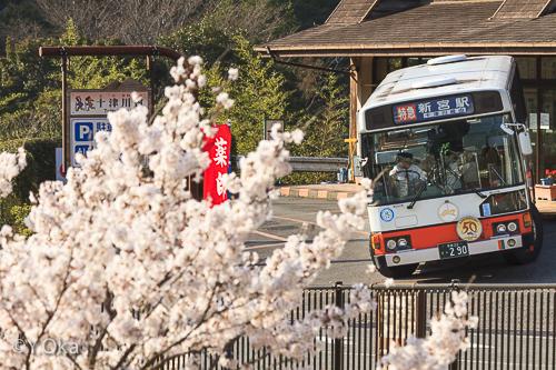 十津川温泉の桜とバス