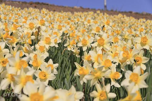 春の果無集落