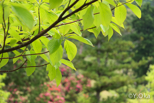 21世紀の森新緑