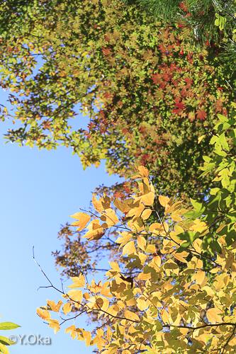 玉置山紅葉