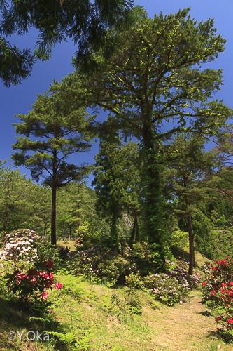 21世紀の森シャクナゲ
