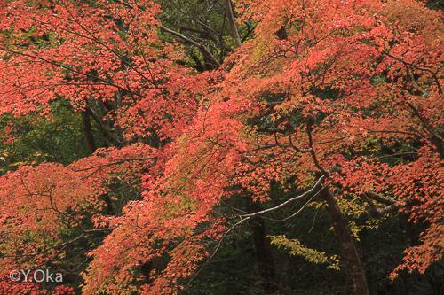 笹の滝の紅葉