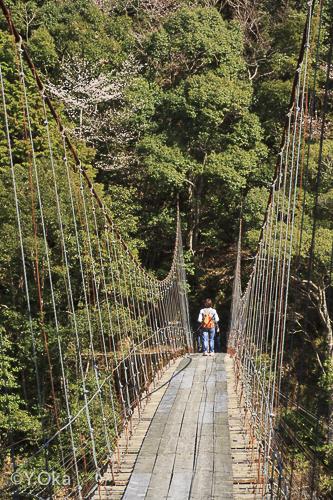 柳本吊り橋