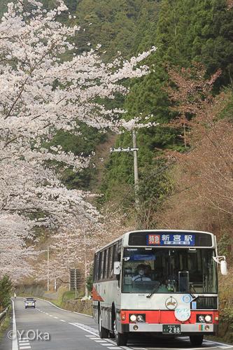 桜とバス小原