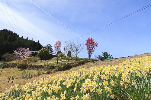 果無集落の春