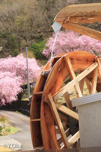 七朗桜と水車