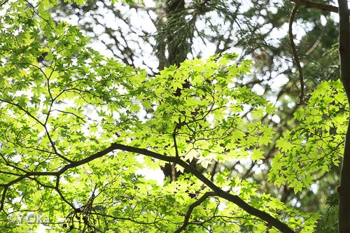 玉置神社新緑