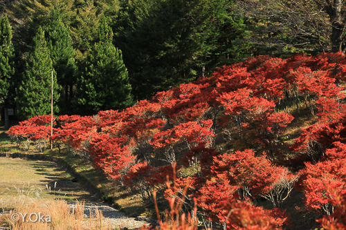21世紀の森紅葉