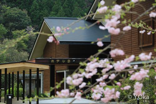 昴の郷の桜