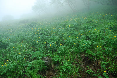 お花畑も霧でまっ白