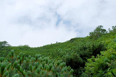 低木の樹林帯と空