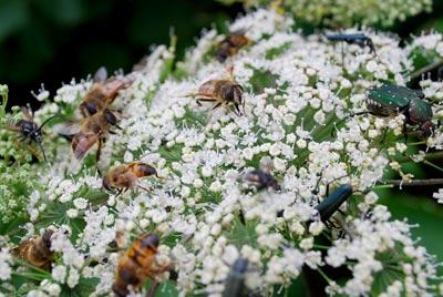 虫たちに大人気の花