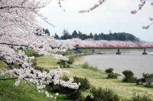 角館の桜並木