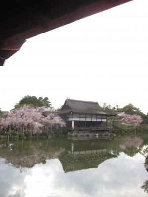 平安神宮・桜