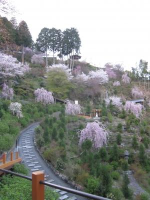 善峰寺・桜苑