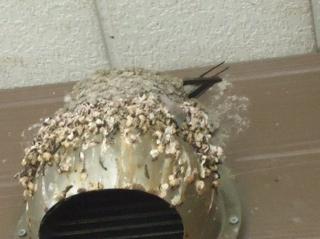 作り方 巣 ツバメ の