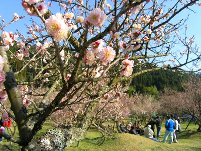 藤川天神の梅