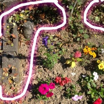 花壇に除草剤まいてから一週間後